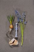 Grape hyacinths, bulbs and white and blue ceramic vessel on stone surface