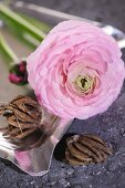 Pink ranunculus flower and bulbs in silver ashtray