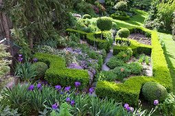 Clipped box hedges and purple flowers in park-style garden