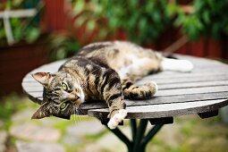 Cat lying on wooden garden table
