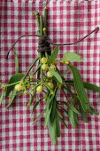 Mistletoe on gingham cloth