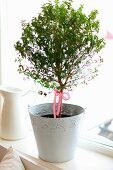 Small tree decorated with ribbon in white metal pot on windowsill