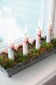 Lit candles in ornate metal window box lined with moss