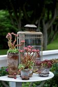 Plants (succulents) in vintage pots on console table mounted on balustrade outside