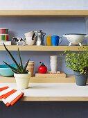 Ausschnitt einer Küchenzeile, Aloe Pflanze und Kräuter in Übertopf, vor Wandablagen aus Holz mit Geschirr im Retro Look
