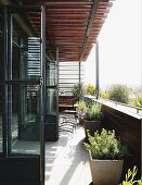 Glass doors opening onto narrow, sunny balcony with potted plants