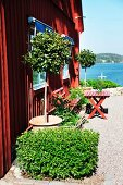 Seating area and foliage plants on gravel terrace adjoining Falu-red, Swedish wooden house by the sea