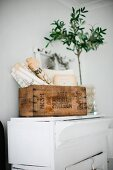 Rustic basket of old newspapers and potted plant on white-painted cabinet