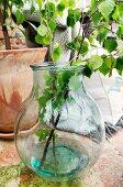 Birch branches in demijohn vase