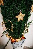 Golden stars and love-heart Christmas decorations on conifer in zinc container with fairy lights
