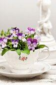 Purple violas planted in vintage collectors' teacup