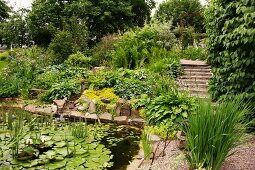 Aquatic plants in pond with rocky edge and garden path with steps in background