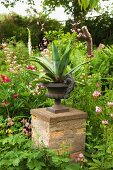 Agave in antique, metal urn on masonry plinth in flowering garden