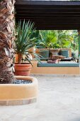 Palm trees on Mediterranean terrace with view of masonry benches