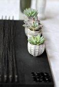 Kleine Sukkulenten in grauen Steintöpfchen auf schwarzem Tischset
