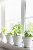 Geraniums in white-painted, terracotta pots on windowsill