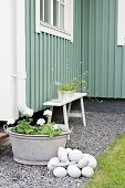 Downspout leading to zinc tub of geraniums and wooden bench against facade of green wooden building