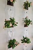 Flowering plants planted in transparent plastic bags hanging on wall