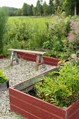 Raised beds with wooden surrounds painted rusty red in garden with rustic bench on gravel floor in background