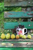 Row of pears and sprig of elderberries in mug on weathered wooden bench