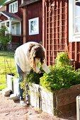 Frau bei Gartenarbeiten, Pflanztrog aus Holz vor Wohnhaus mit rotbrauner Holzfassade