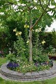Baum in rundem Beet mit Steineinfassung, im Garten