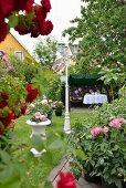 Blick zwischen Rosenbusch und Dahlien auf Blumentöpfe im Garten