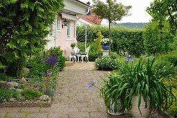 Grünpflanze und Agapanthus im Topf auf Terrasse mit Waschbetonfliesen, im Hintergrund Sitzplatz vor Wohnhaus