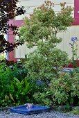 Blaues Keramik-Vogelbad auf Kiesboden vor Büschen und Holzfassade im Garten
