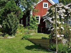 Sonnenbeschienener Garten mit weiss blühendem Klematis, im Hintergrund rotbraun gestrichenes Holzhaus