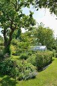 Beet und mit Hecke eingezäunter Bereich in sommerlichem Garten