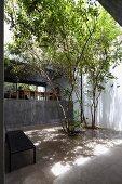 Bank und Eukalyptusbäumen im Innenhof mit Betonfliesen