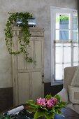 Zimmerefeu in Zinkgefäss auf antikem Schrank mit Patina, Bouquet mit Blättern und Blüten auf Tisch im Vordergrund