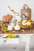 Collection of white ceramic vases, autumn leaves, fruits and pumpkins on rustic wooden table