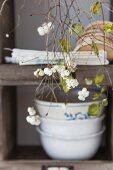 Snowberry branches in front of crockery on shelves
