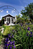 Flowering iris in garden with summer house in sunlight in background