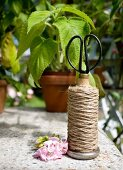 Vintage reel of twine and scissors on stone surface in front of seedling in terracotta plant pot