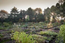 Beetreihen mit Herbststauden und Baumgruppen in Gärtnerei bei Morgenstimmung