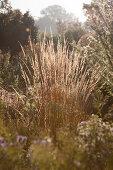 Herbstliche Gräser im Sonnenlicht in ländlicher Umgebung