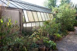 Pflanztöpfe, Stauden und Gehölze vor Gewächshaus einer Gärtnerei