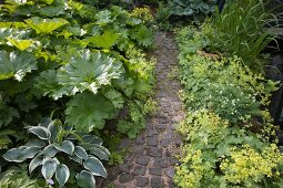 Hosta and other foliage plants lining narrow paved garden path