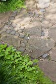 Path paved with stone flags and cobbles