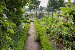 Schmaler Weg zwischen Beeten mit Formhecken in Garten