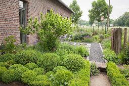 Formgeschnittene Buchsbüsche und gekiester Weg im Vorgarten, Bauernhaus aus Ziegel
