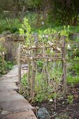 DIY protective fence of branches and willow whips around plants growing in bed