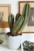 Kaktus in hellgrauem Porzellantopf