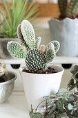 Kaktus in weissem Porzellantopf