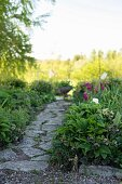 Stone-paved path between beds of hellebores and tulips in spring garden