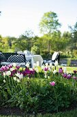 White and purple tulips in front of set table with bench and chairs in sunny garden