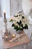 White-flowering poinsettia and lit candles in candlestick on shabby-chic stool